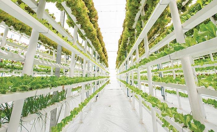 Agricoltura indoor del futuro