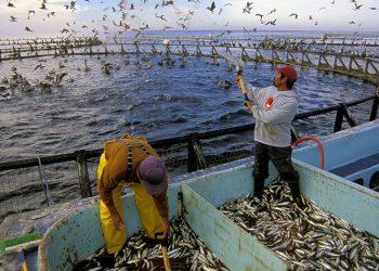 Trasformare CO2 in mangime per pesci