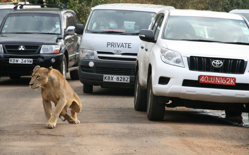 leonessa e turisti Nairobi's National Park Kenya, foto Reuters/Edmund Blair (https://www.weforum.org)