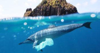 Smaltimento biologico della plastica: le contromosse della natura