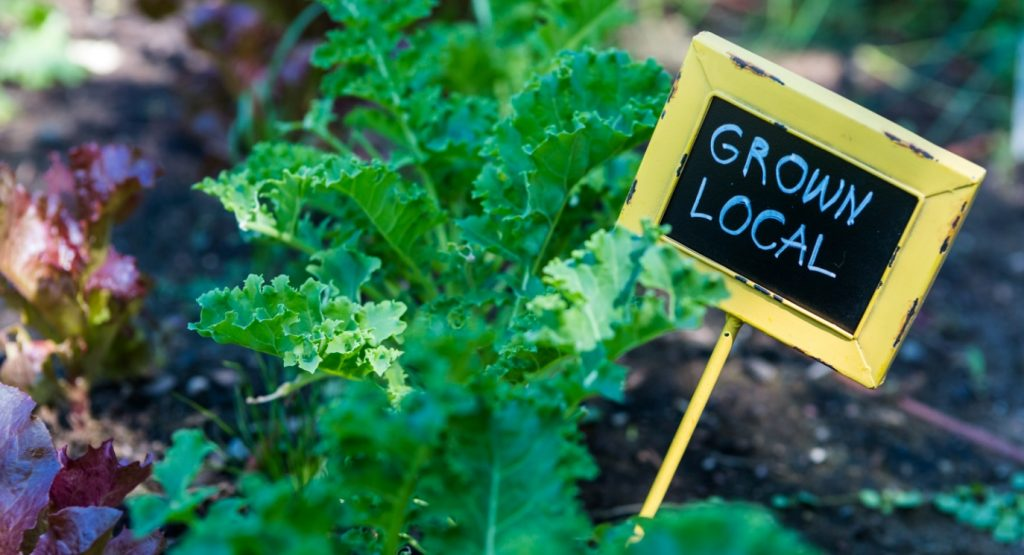 Sostenibilità del cibo e agricoltura