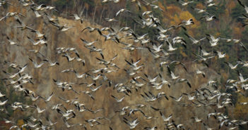 Sesta estinzione di massa, uccelli foto di REUTERS/Mathieu Belanger(foto: https://www.weforum.org)