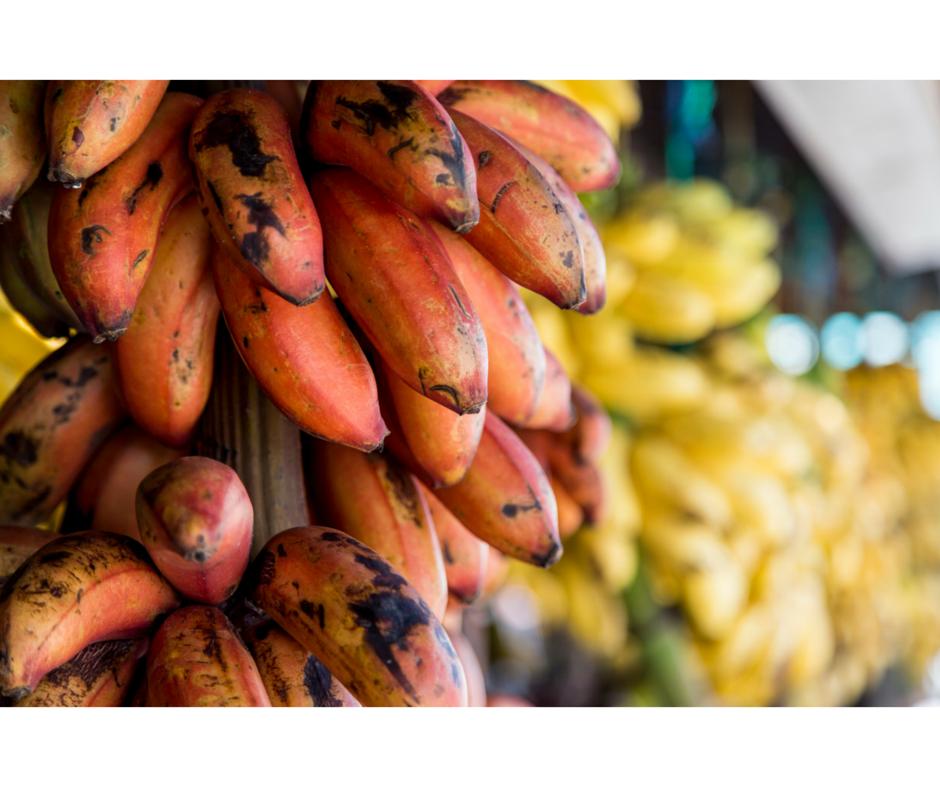 Estinzioni agricole: Banana Asupina o super-banana(www.scottsdaleeye.com)
