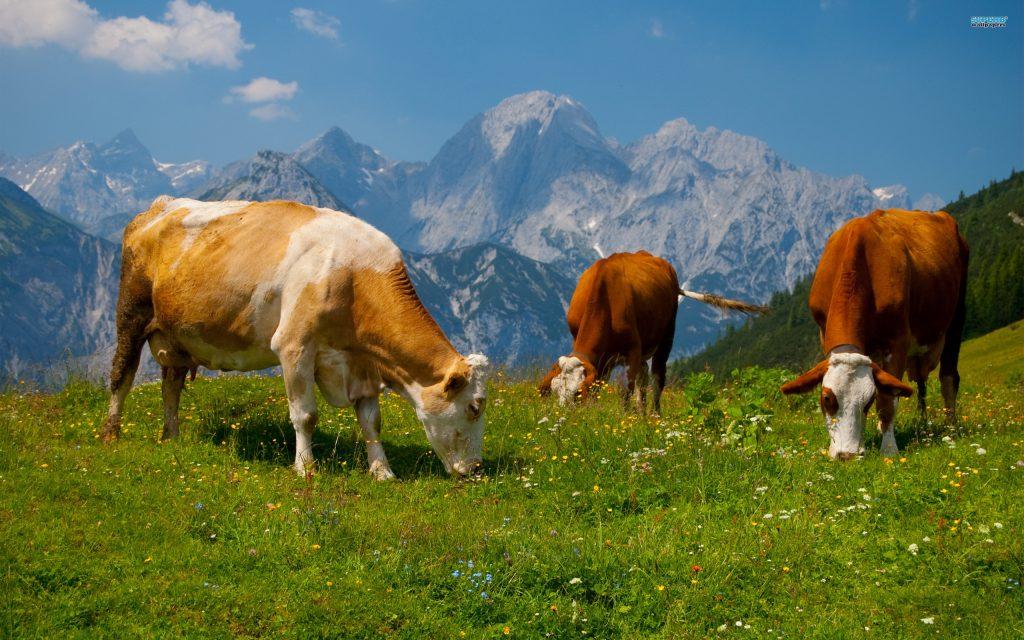 Impatto ambientale degli allevamenti: che succederebbe se smettessimo di mangiare carne?