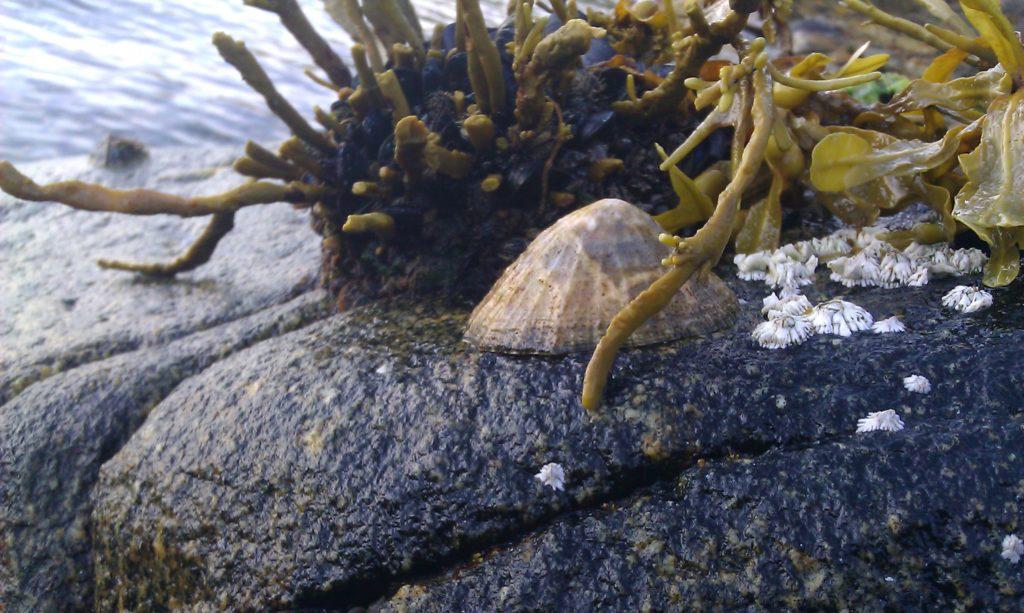 Ecosistemi acquatici: gli erbivori possono contrastare gli effetti del riscaldamento globale