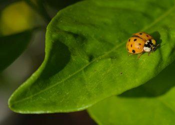 Biotecnologie per la bioagricoltura