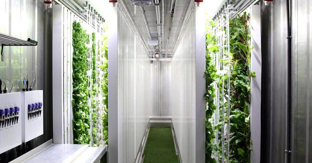 Agricoltura innovativa: giardini idroponici in container dismessi