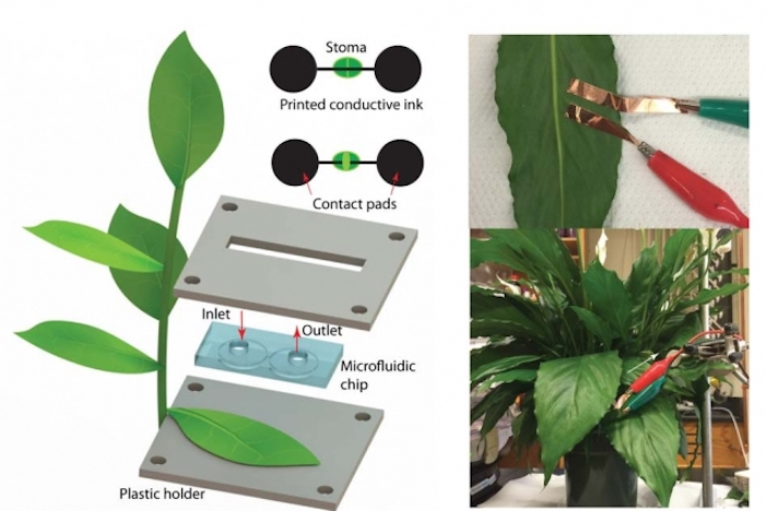 sensori sulle foglie