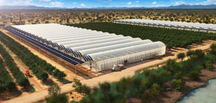Agricoltura nel deserto: la Giordania introduce il Sahara Forest Project