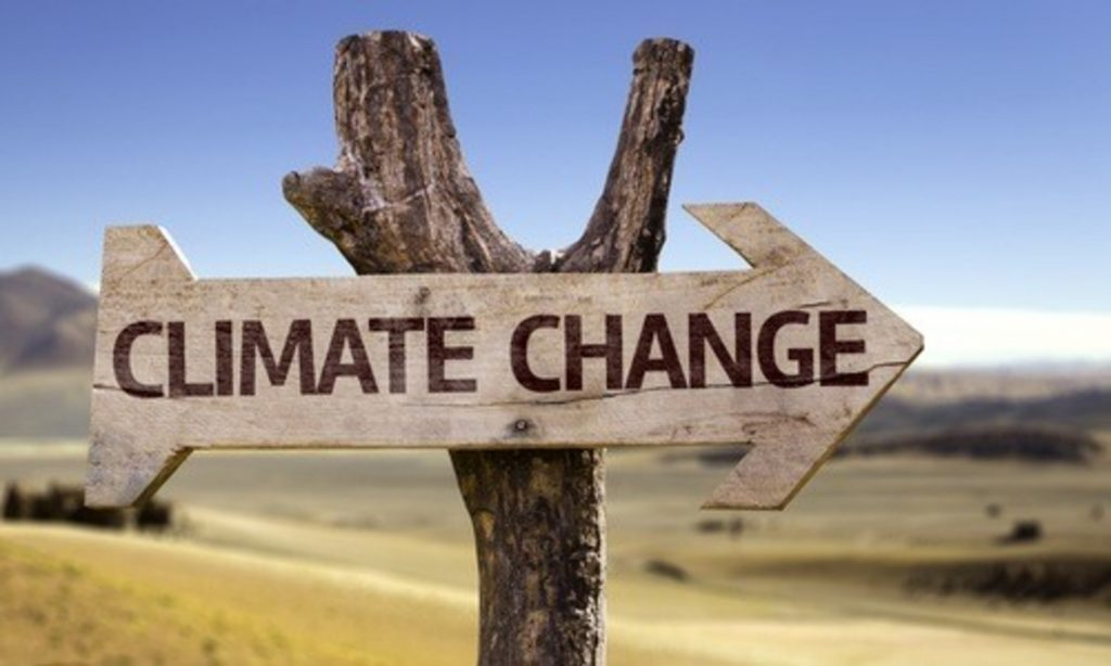 Innovazione contro i cambiamenti climatici: dalla mente di un teenager la possibile soluzione