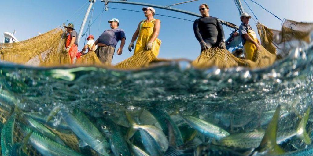 Danni della pesca elettrica: l'Europa apre ad un utilizzo massiccio di questa tecnica