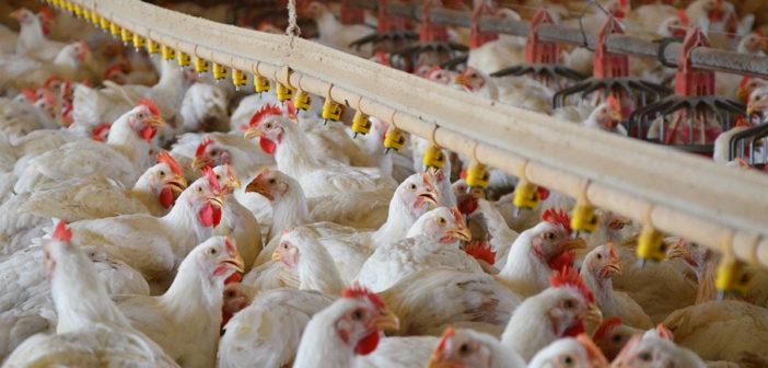Riduzione degli antibiotici negli allevamenti: un fenomeno in atto a livello globale