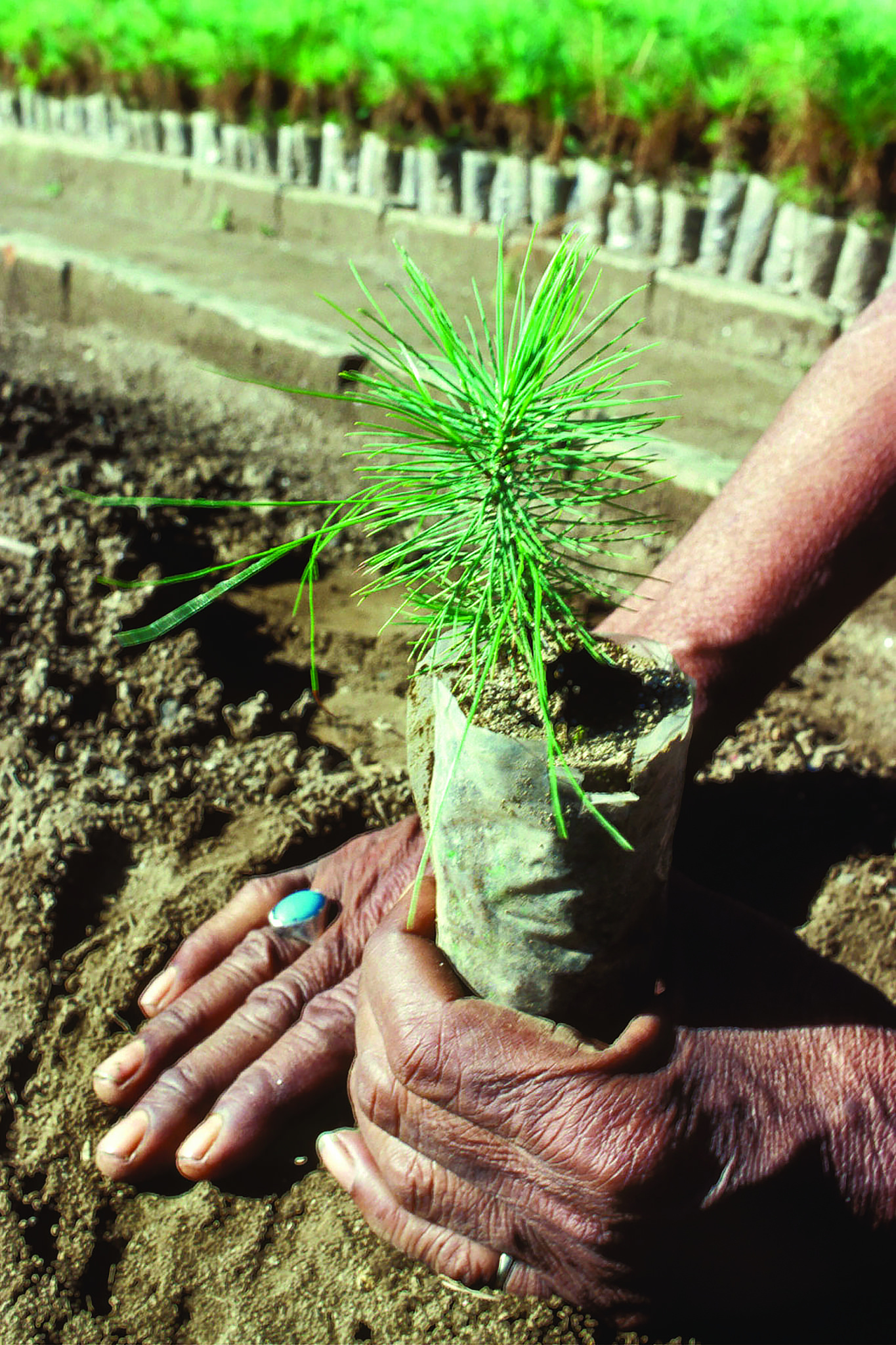 fermare la deforestazione