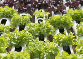 Future evoluzioni agricole: crescere piante con i bitcoin