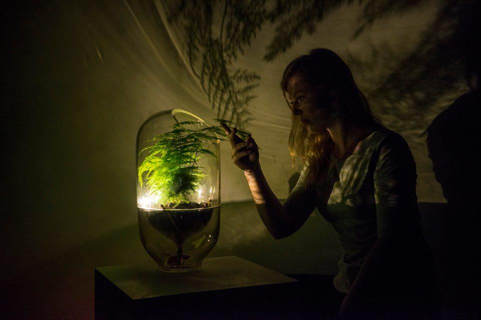 Living light (foto: Living light (foto: https://www.facebook.com/livinglightenergy/)