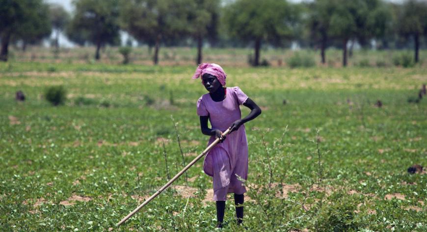 Sviluppo dell'agricoltura nell'Africa sub sahariana