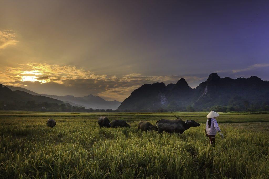 agricoltura riso Asia (foto: www.pixabay.com)