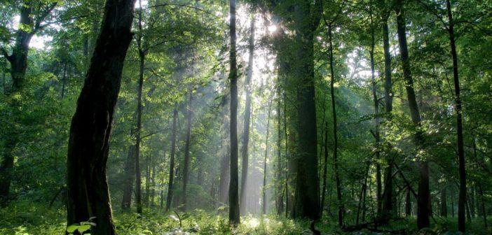 aumento delle foreste nei paesi ricchi