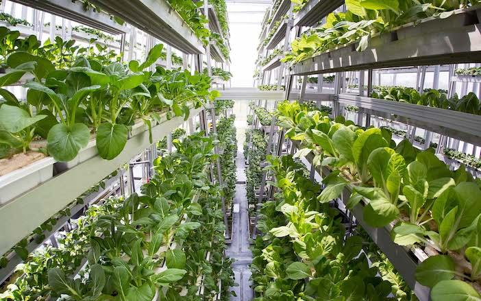 architettura e agricoltura indoor
