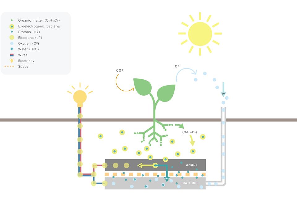 Energia dalle piante: infografica di Living Light (foto: https://www.livinglight.info/)