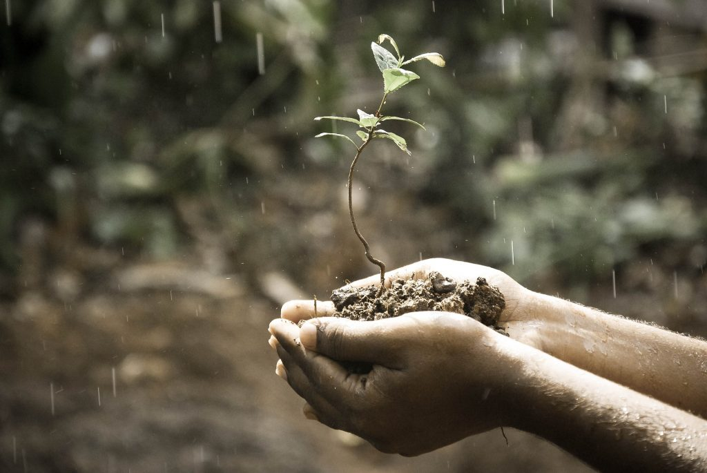 Il suolo risorsa per l'agricoltura (foto: www.pixabay.com)
