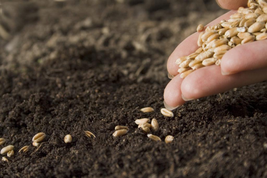 Salvaguardia dei semi