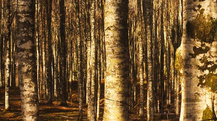 foreste degradate