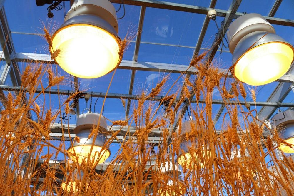 Agricoltura e sostenibilità: lampade speciali per far crescere le piante velocemente