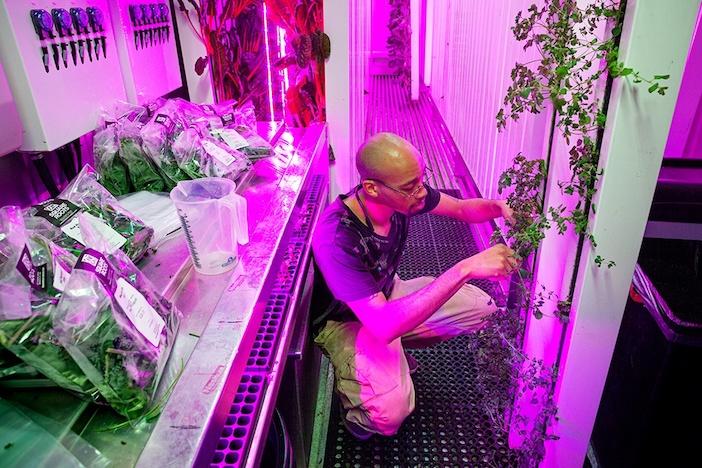 agricoltura urbana indoor