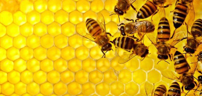 Proteggere le api