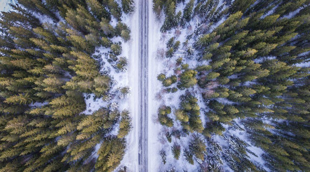 droni che piantano alberi