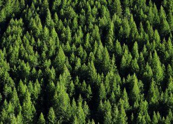 nuova Foresta del Nord