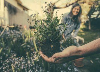 Giardinaggio consigli
