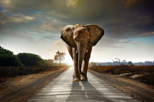 L'elefante africano