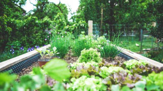 orto naturale biologico