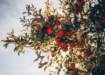 1 frutto su 4 perso 2021 Coldiretti